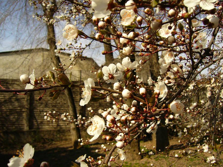 primavera by alecarote