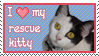 Heart My Rescue Kitty by ArtistMeli