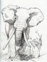 Elephant by ChineseWarri0r