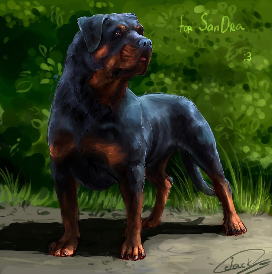 Rottweiler Wallpaper: Rottweiler By LonGrand On DeviantArt