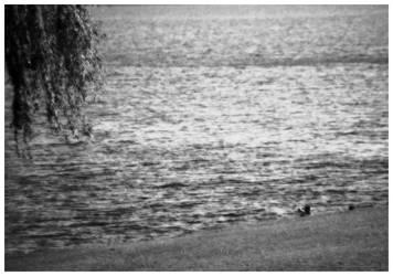 'BarlineckieWodnePola' 06 by negativland1976