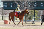 Jockey Maria Remedio Set # 43 by JockeyMariaRemedio