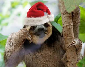 Cighat Santa Sloth