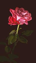 Rose by oakenvial