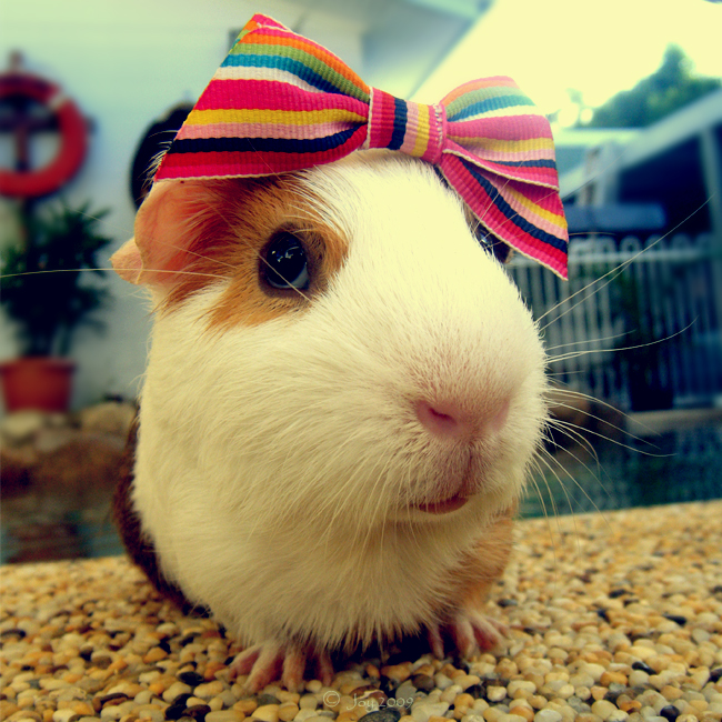 cute, marsupial, bow