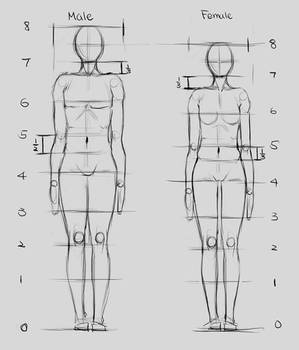 Proportions 1