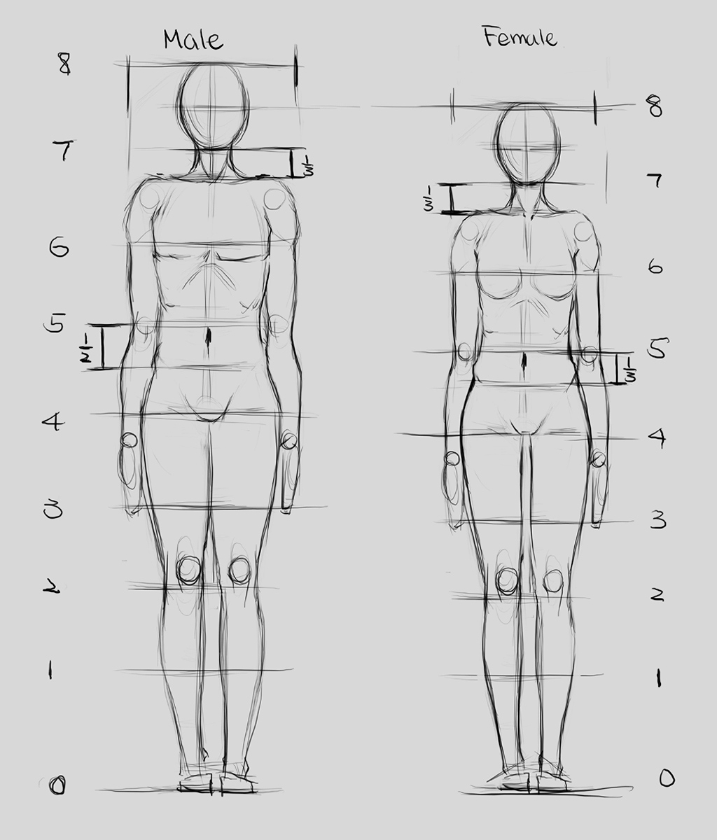 Proportions 1 By Renevatia On Deviantart