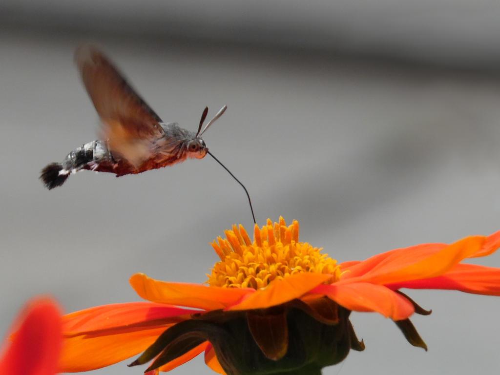 Papillon colibri. by Michel-de-Lorient
