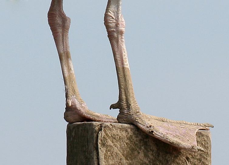 seagull feet by MadameMimii