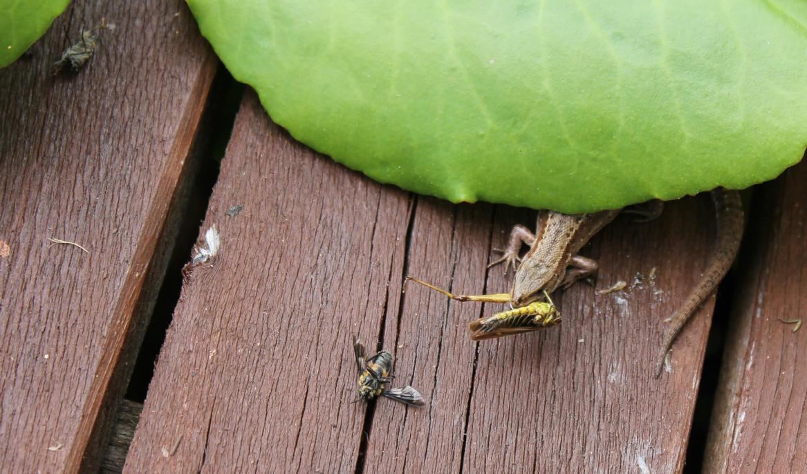 Yummy...! Grasshopper leg... by LemonicDemon