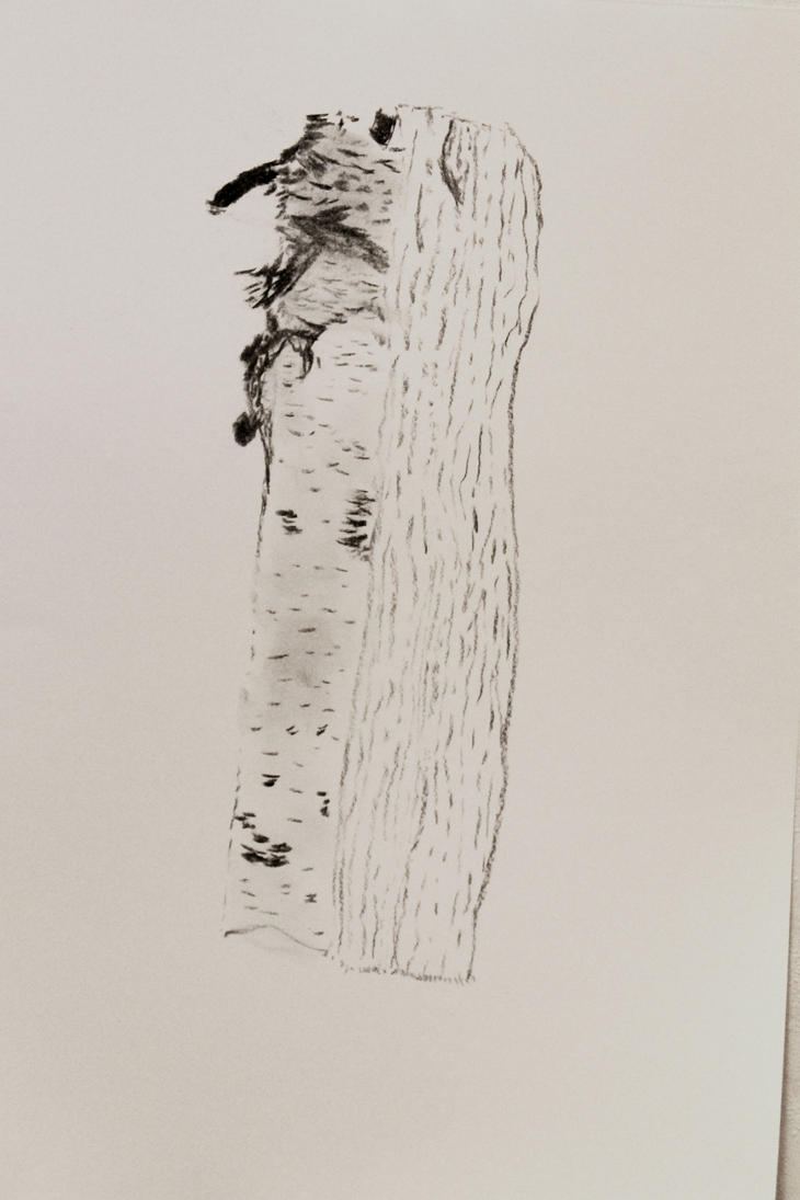 A birch log drawn with charcoal by LemonicDemon