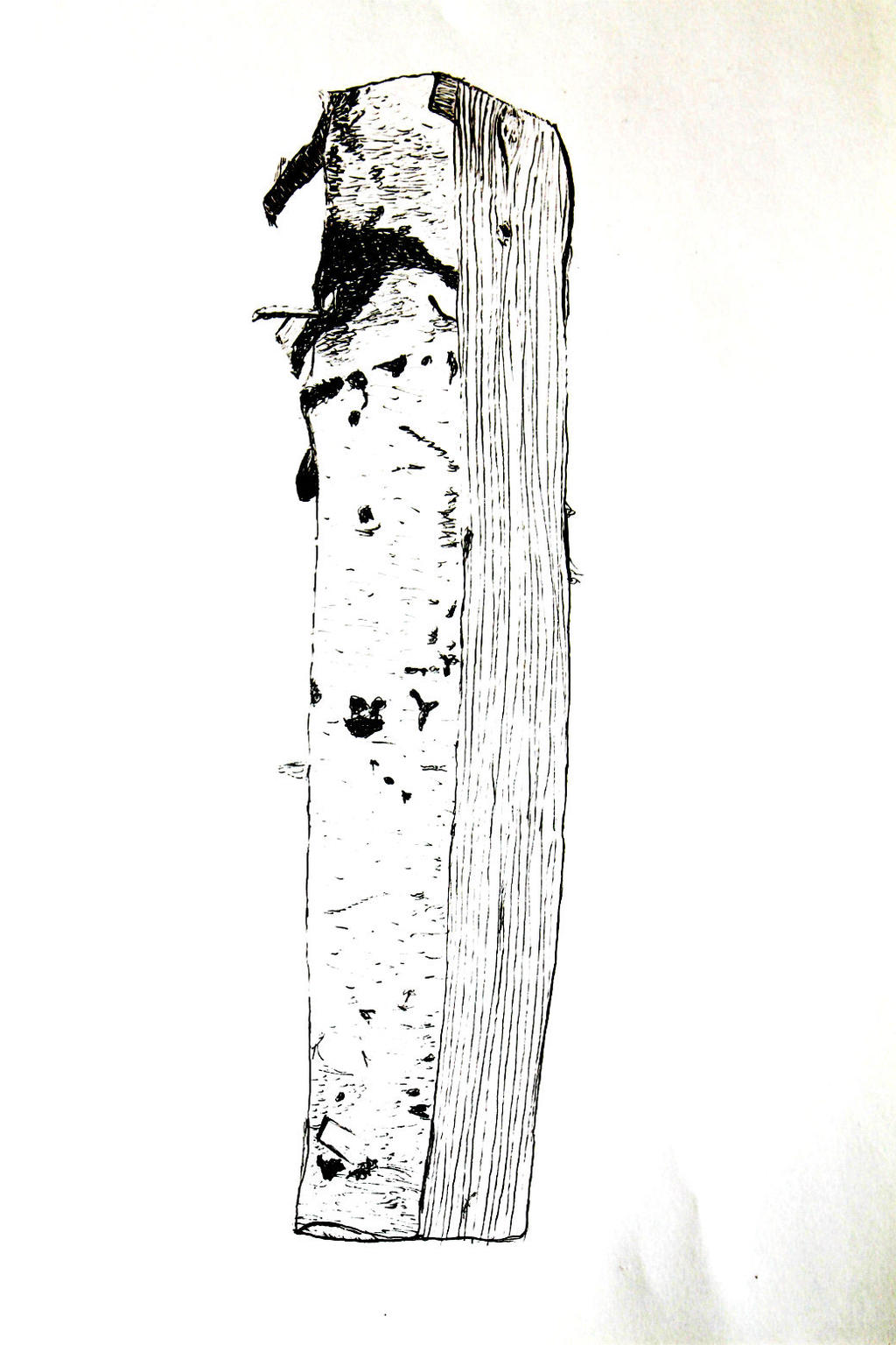 Birch Log - Marker by LemonicDemon