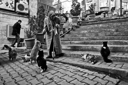 Old woman and cats 2