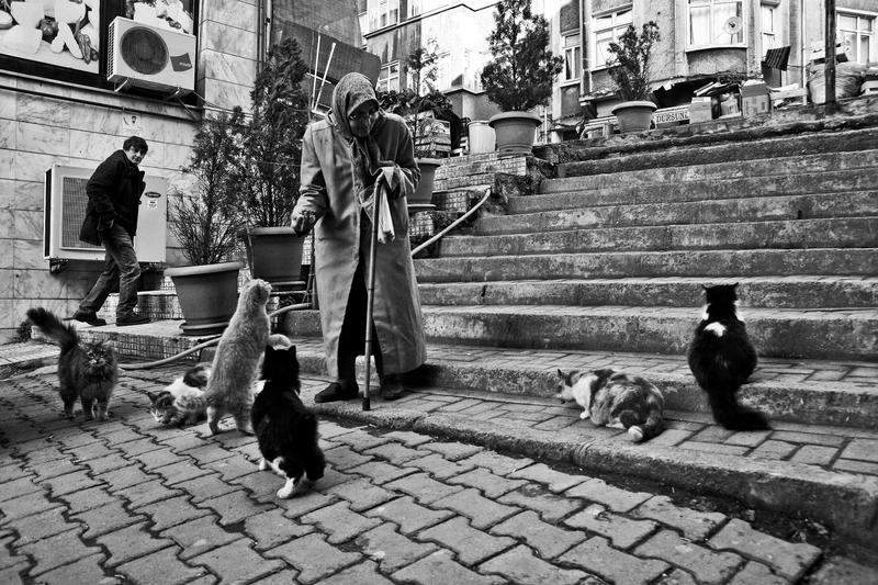 Old woman and cats 2 by ~emregurten