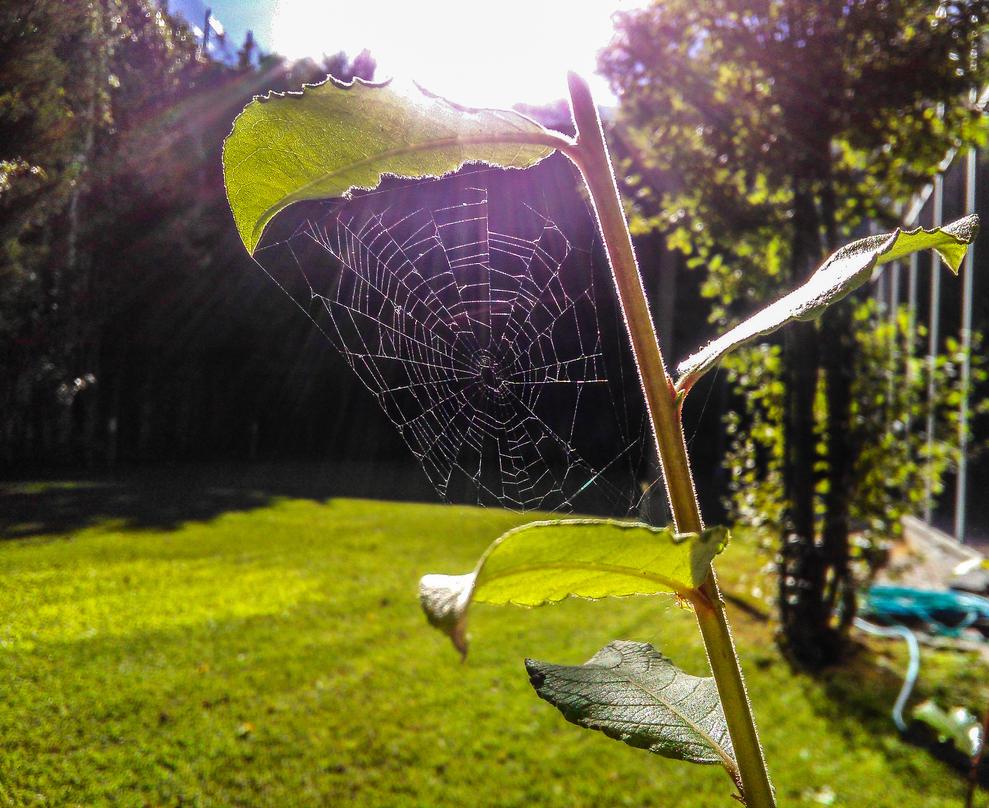 cobweb by emregurten