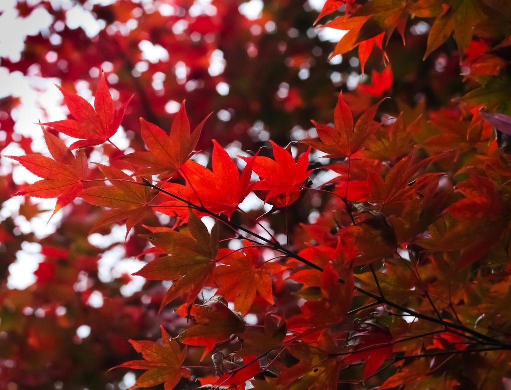 autumn in Istanbul by emregurten