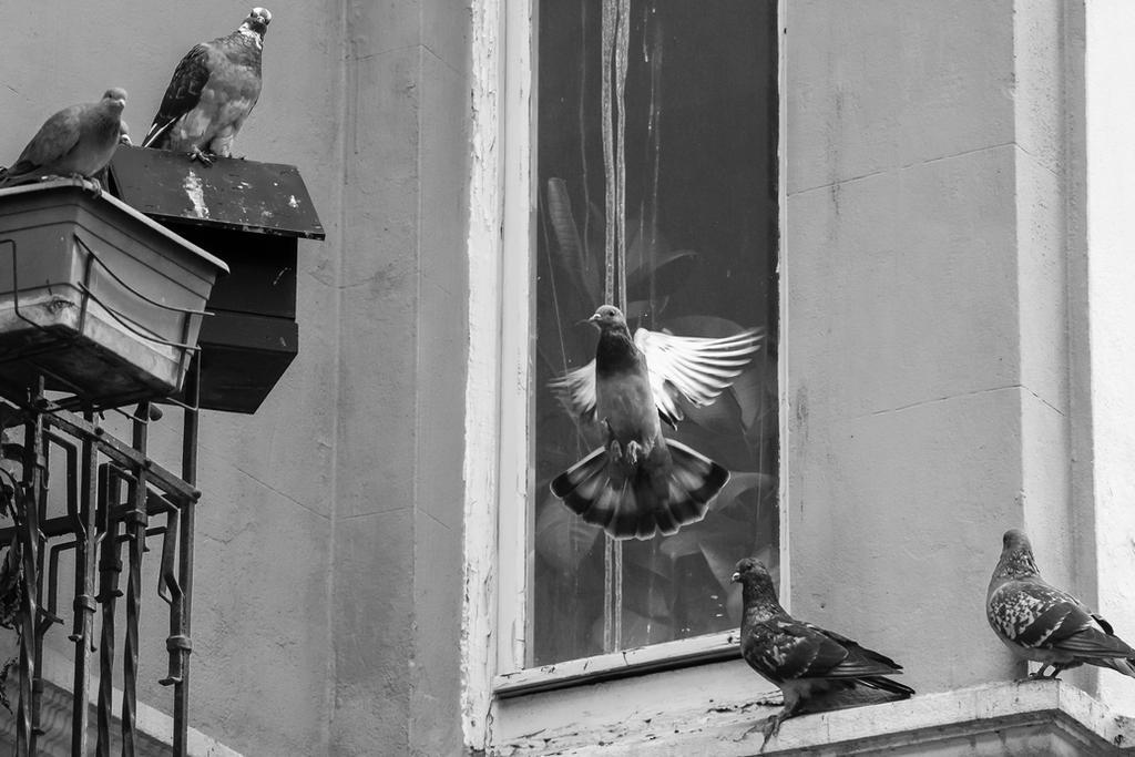 pigeons by emregurten