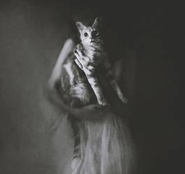 le portrait du chat