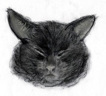 gato by xesky