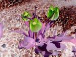Flowers in negative