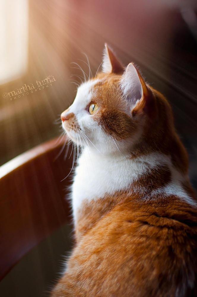 Miss Loo in Sunlight by MarthaTuma