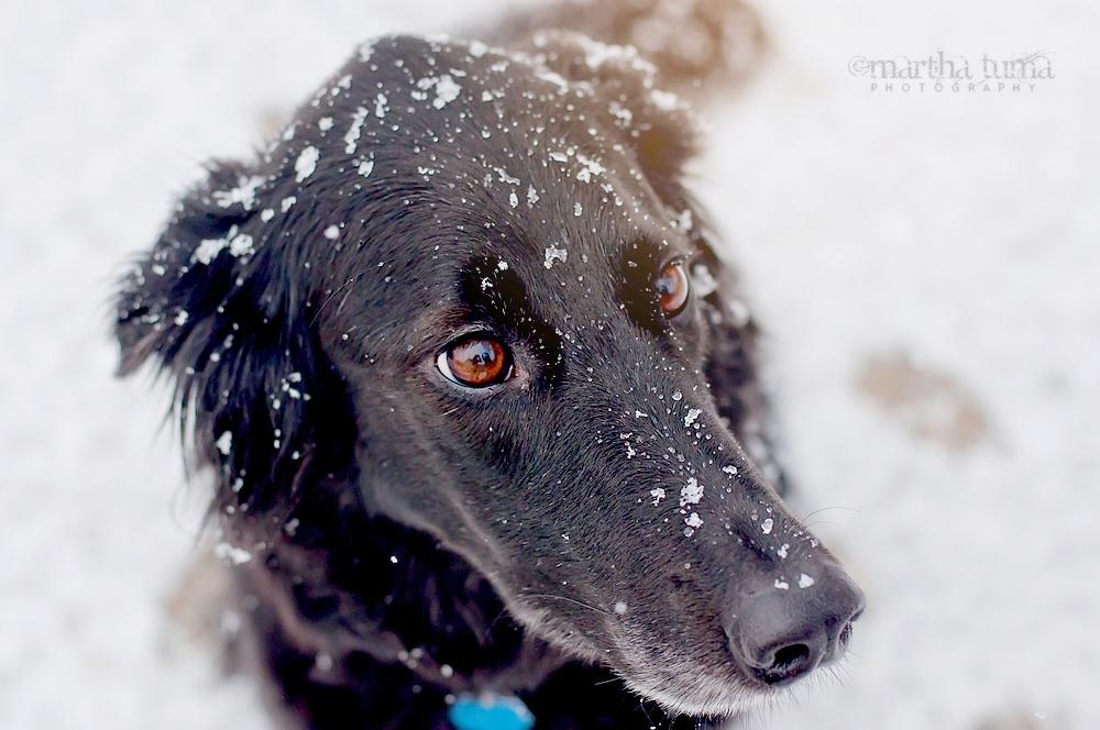 Snow Kisses by MarthaTuma
