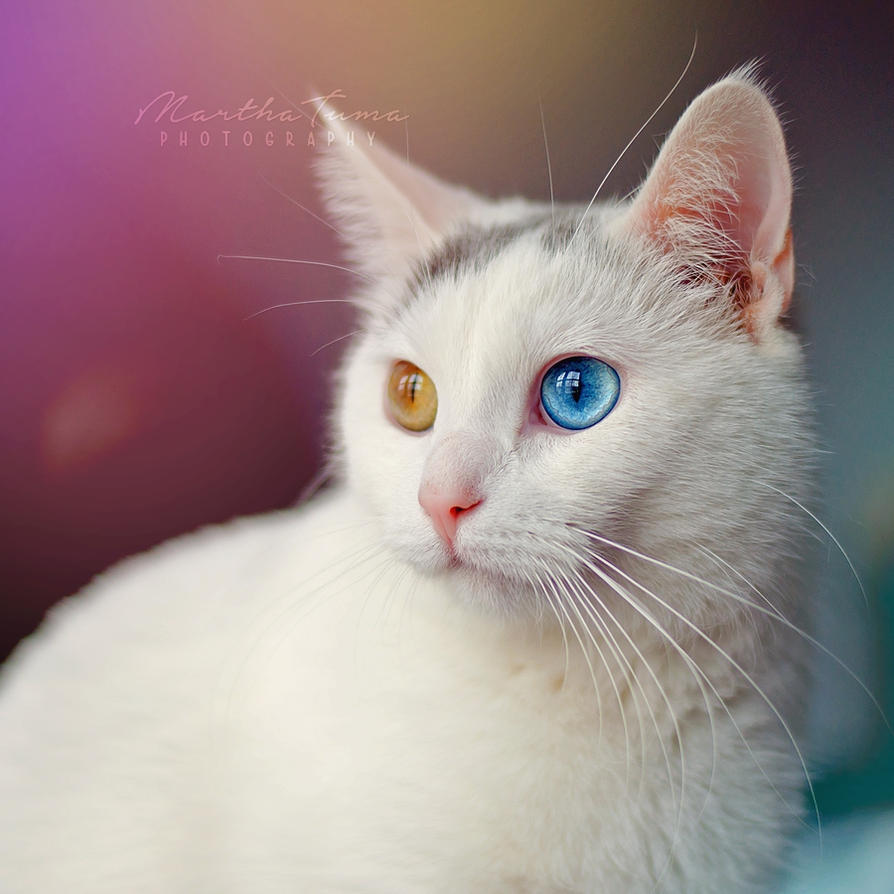 Winnie the Heterochromic Kitty XII by MarthaTuma