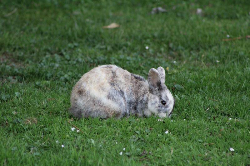 Rabbit by LevanaTempest