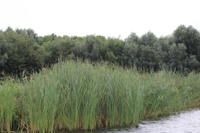 Waterplants 1 by LevanaTempest