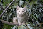 Barn Kitten 006