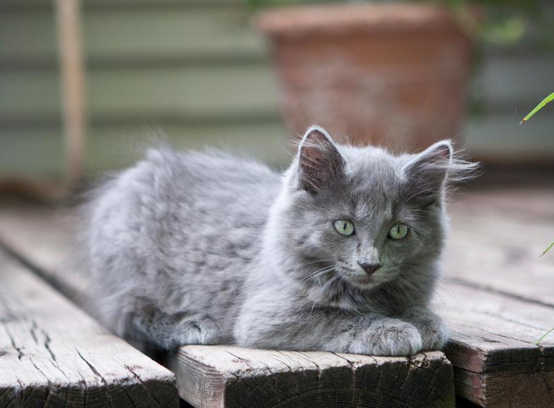 Barn Kitten 007 by deathbycanon-stock