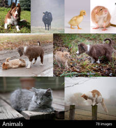 Animals Gallery Sample