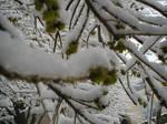 Snow2010-14