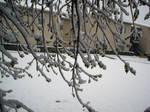 Snow2010-10