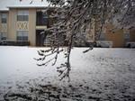 Snow2010-7