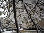 Snow2010-6