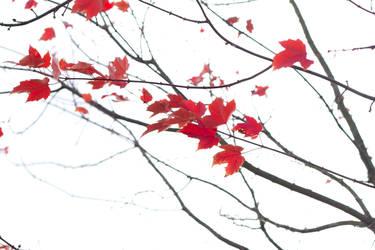 Autumn Zen by verymoon