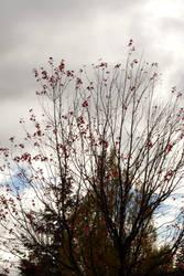 Fall Sky by verymoon