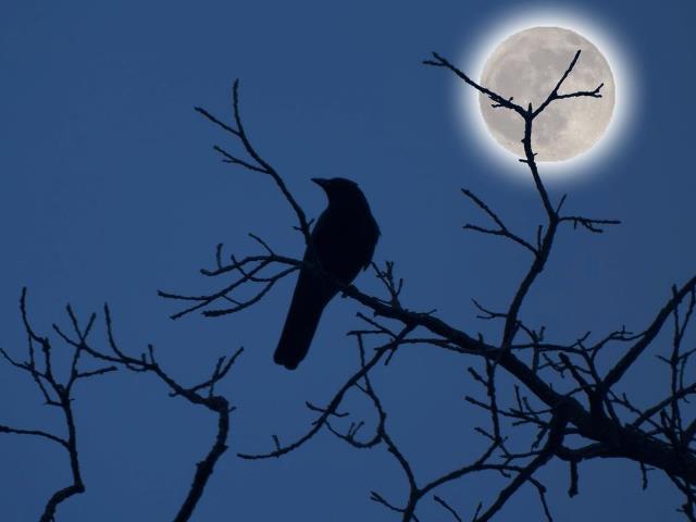 Night Spirit by Lisa99