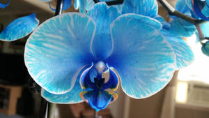 Watercolor orchid by Lisa99