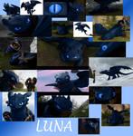 Luna The Night Fury