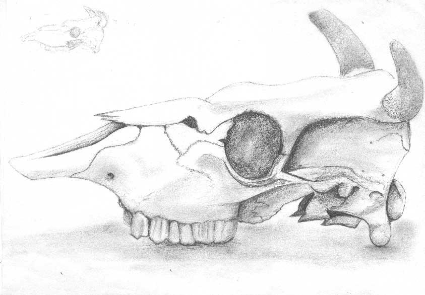 Skull by SmudgedPixelsArt