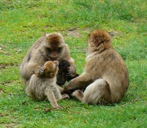 Monkey family by Kangaroo82