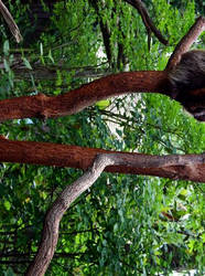 Mr. Porcupine by Jestacy