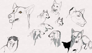 Dog sketches by dyb