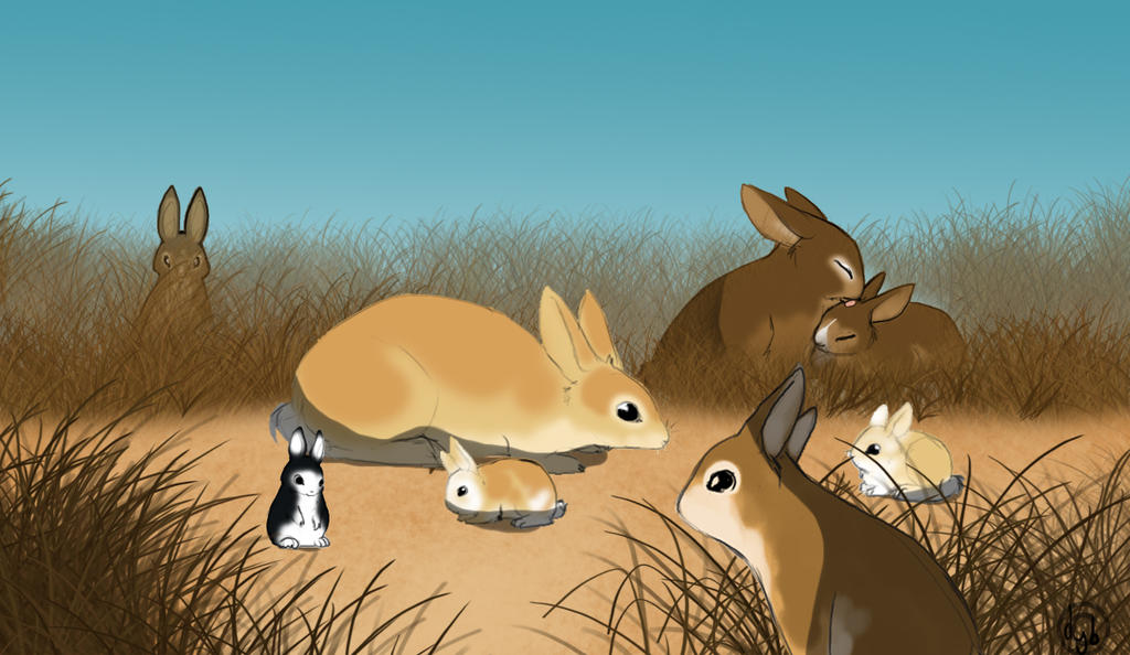 Wild Rabbits by dyb
