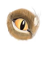 The Eye  by dyb