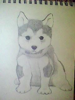 Showing Gallery For Drawings Of Husky PuppiesCute Husky Puppy Drawings