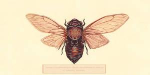 Cicada - Commission