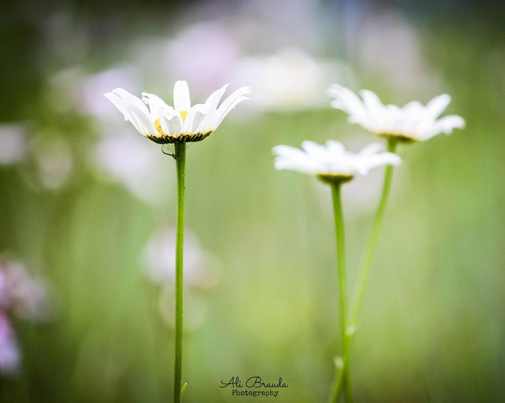 few flowers in my garden by ahley